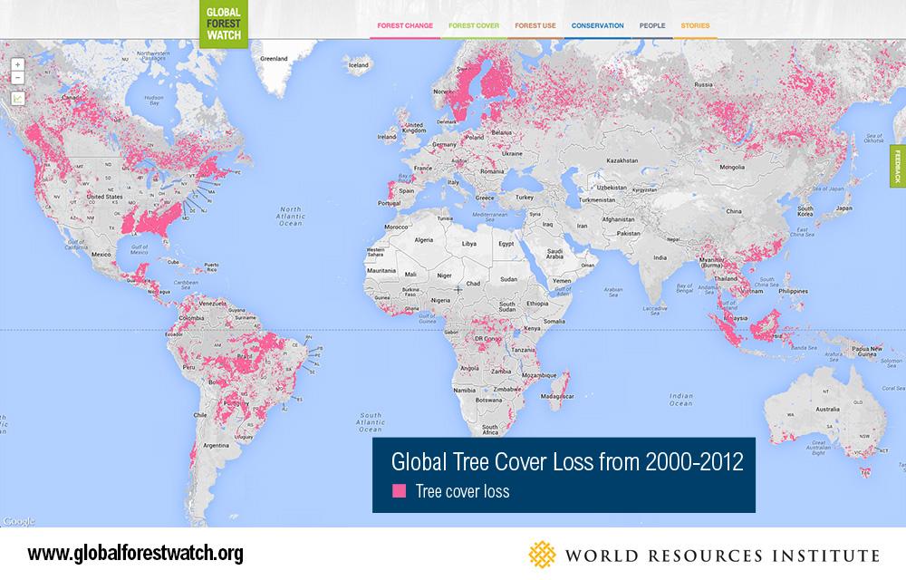 Google lança observatório mundial do desmatamento