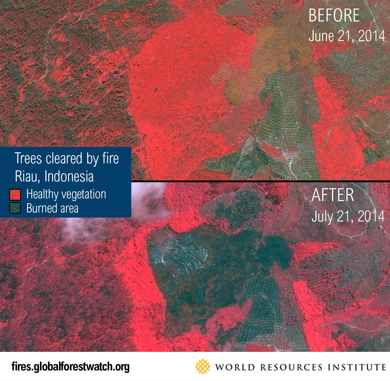 Trees cleared by fire in Riau, Indonesia