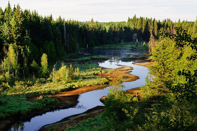 canada_boreal_forest