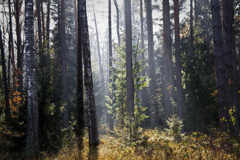 Białowieża Forest in Belarus
